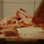 Solení sádla na slaninu